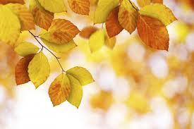 I KNOW NO LACK, NO FEAR, NO WORRY, NO SHAME: Week 38 Day 7 of the 2014 MeditationChallenge