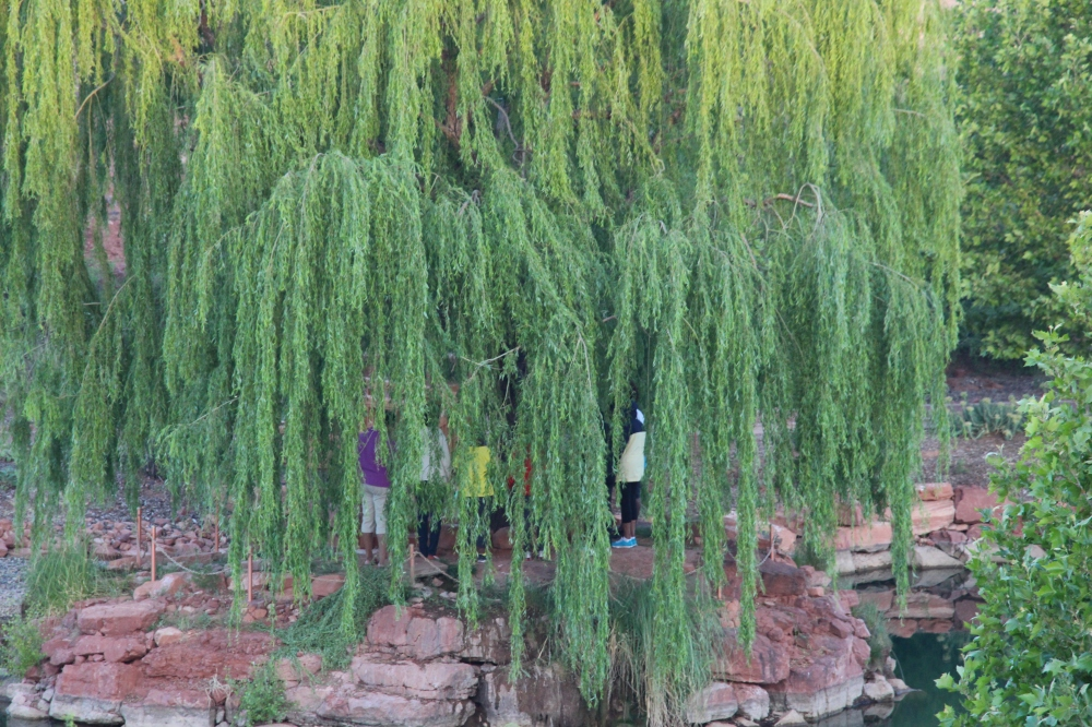 Under the Wheeping Willow